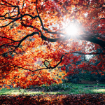 Getting Trees Ready for Winter: 7 Tips